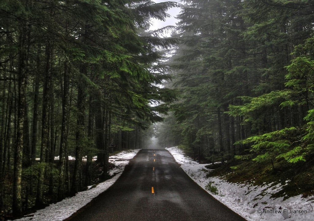 photo of a road in the middle of a snowy forest