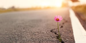 Photo of flower growing up out of a crack in the cement